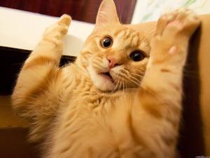 scared-cat-1152-864-7190