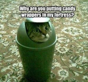 funny-cats-hiding