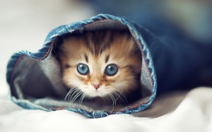 Cute-Cat-Tumblr-Pics-2-300x187